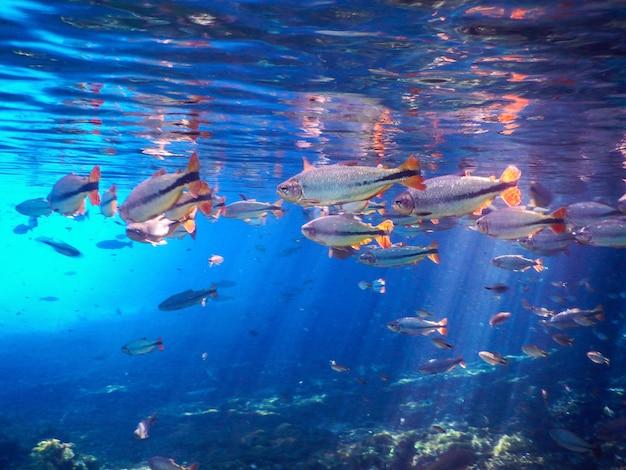 Fischen sie im fluss der stadt bonito