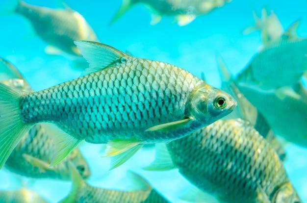 Fischen sie im wasser, grüner hintergrund, muster verwischt