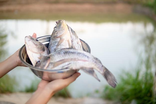 Fischen sie in der schüssel an hand für das kochen auf unscharfer teichnatur