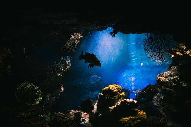 Fischen sie in einem aquarium