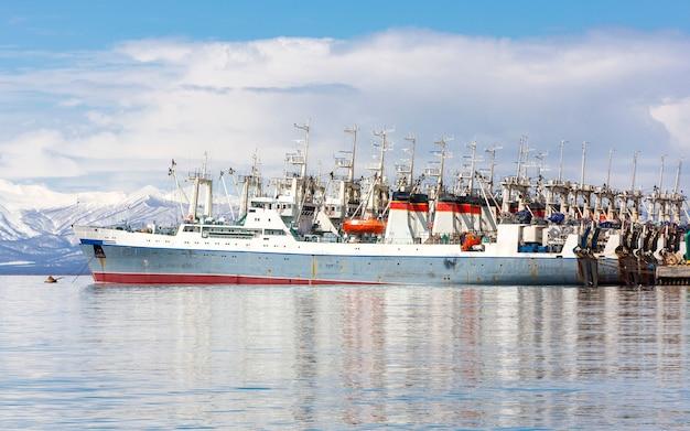 Fischwadenfänger in der nähe des piers in der avacha-bucht in kamtschatka.