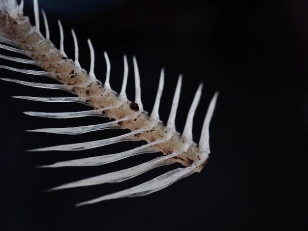 Fishbone auf dem schwarzen hintergrund.