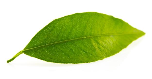 Flach ein grünes blatt des zitrusbaums. auf weißem hintergrund isoliert. nahansicht