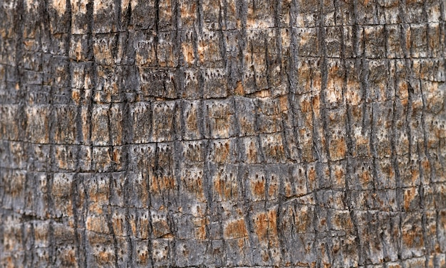 Flach gelegte steinoberfläche