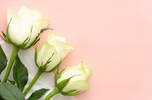 Flach legen sie drei weiße rosen auf einem rosa hintergrund