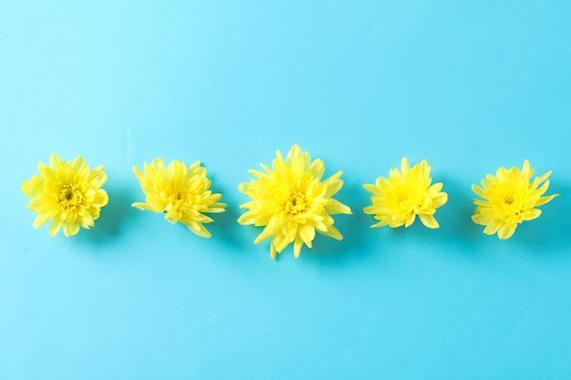 Flach liegen. gelbe chrysanthemen auf blauem tisch