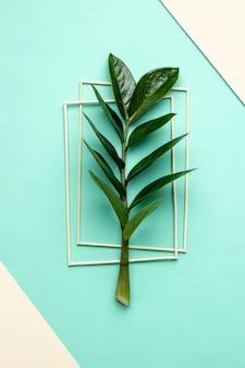 Flach liegende grüne pflanzenzusammensetzung