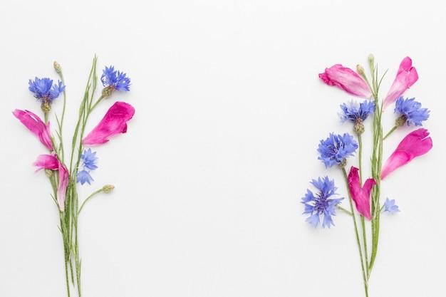 Flach liegende kornblumen und rosa blütenblätter