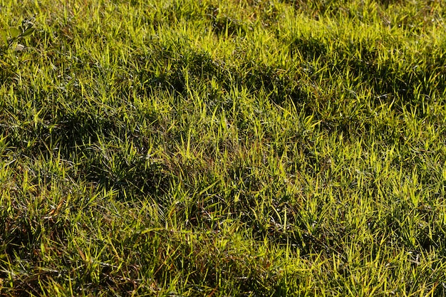Flach liegendes grünes gras