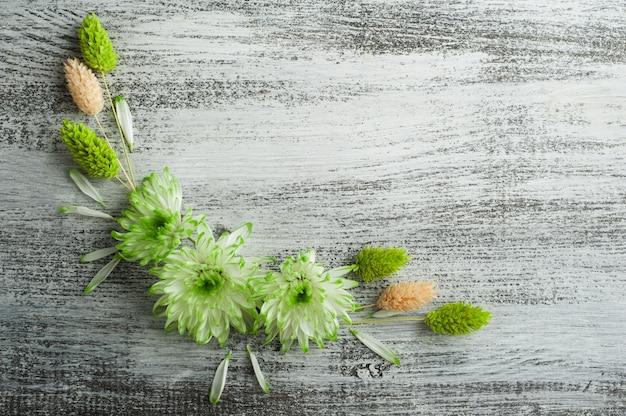 Flach mit grüner chrysantheme liegen