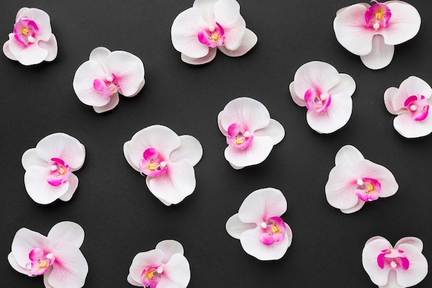Flache anordnung der orchideen