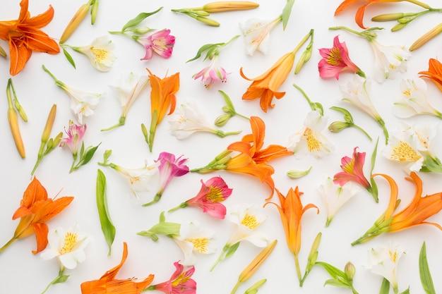 Flache anordnung von bunten alstroemerien und lilien