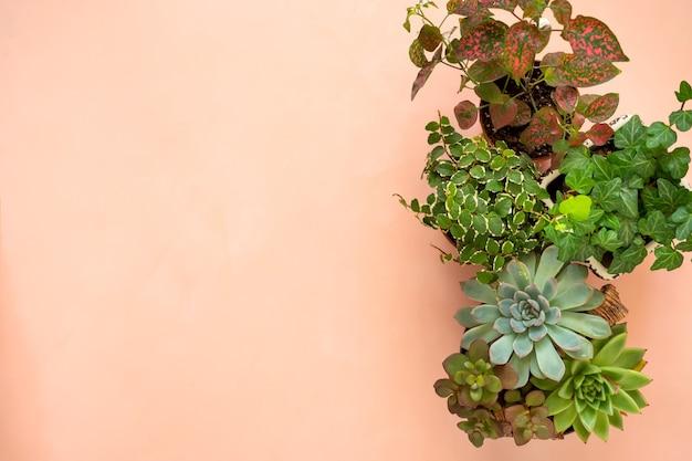 Flache banner kopieren raumrahmen der trendigen sammlung verschiedener zimmerpflanzen und sukkulenten rosa hintergrund.