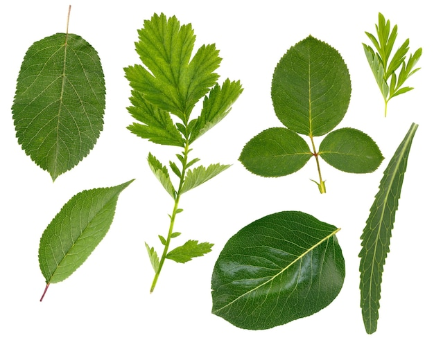 Flache blattschicht verschiedener pflanzen ist auf einer weißen oberfläche isoliert.