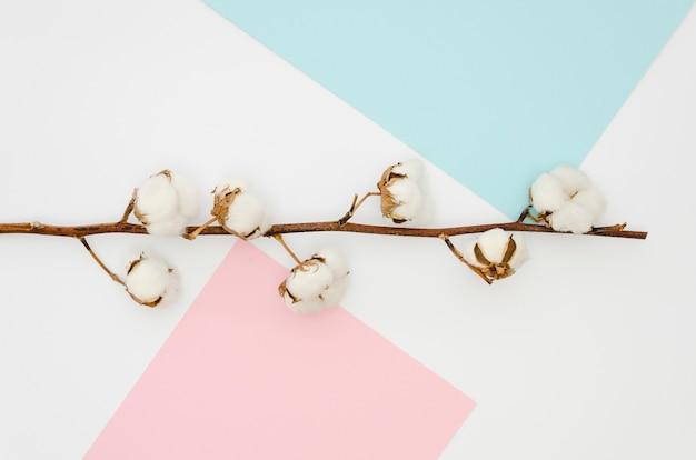 Flache gelegte baumwollblumen auf buntem hintergrund