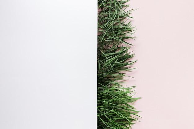 Flache grasfläche mit exemplar