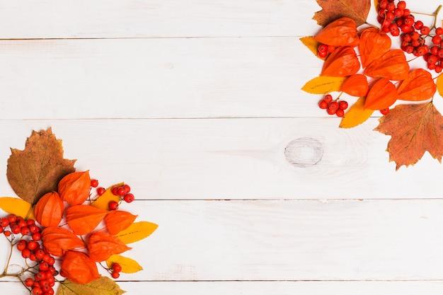 Flache herbstlage der orange winterkirsche, blätter, ebereschenbeeren auf weißem hölzernem hintergrund mit kopienraum. flache lage, draufsicht, kopierraum. herbst