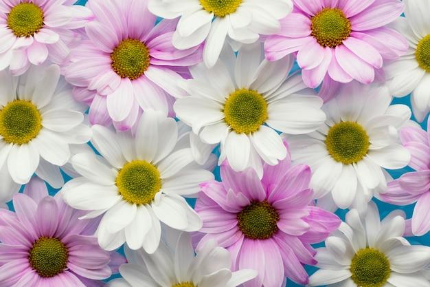 Flache lage der bunten frühlingsgänseblümchen