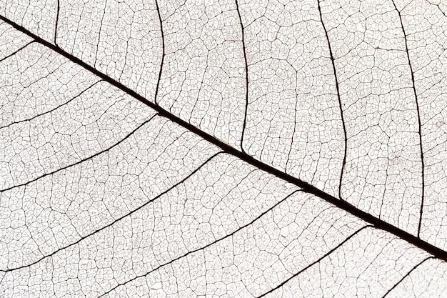 Flache lage der durchsichtigen blätter textur