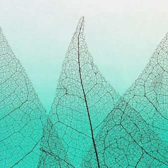 Flache lage der farbigen transparenten blätter lamina