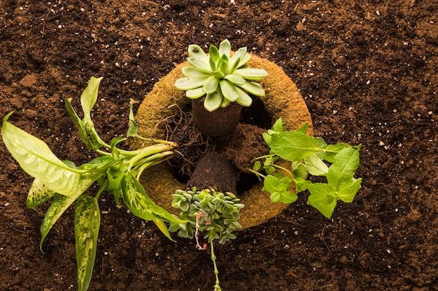Flache lage der grünpflanze