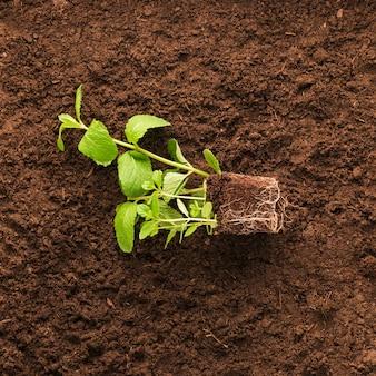 Flache lage der pflanze auf dem boden