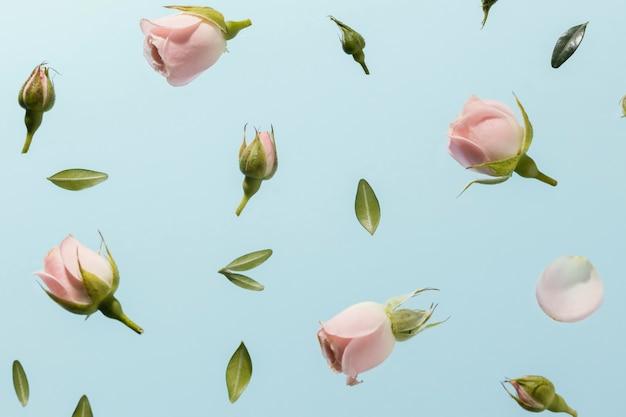Flache lage der rosa frühlingsrosen