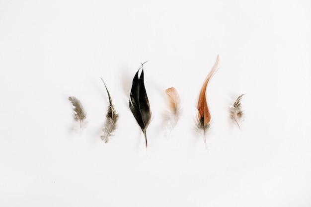 Flache lage der schönen vogelfedern
