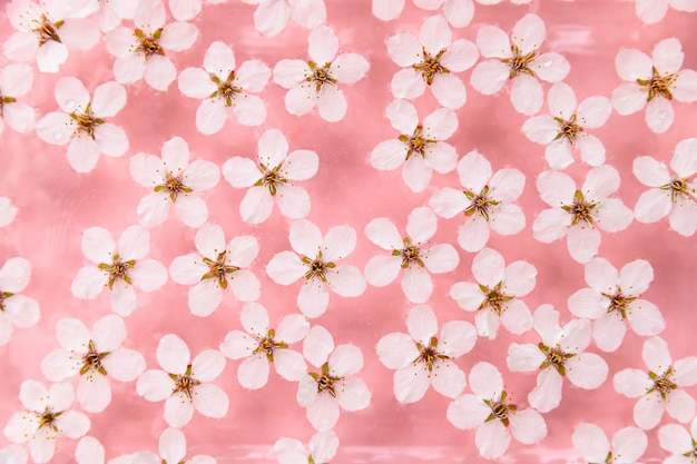Flache lage der schwebenden wilden kirschweißblumen auf der oberfläche des wassers, pastellrosa hintergrund