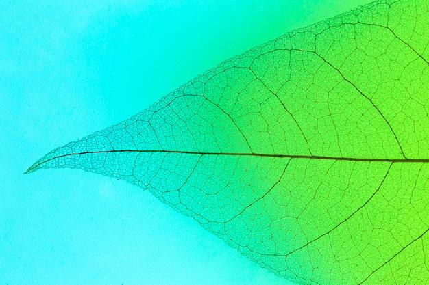 Flache lage der transparenten blattschicht