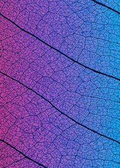 Flache lage der transparenten blattstruktur