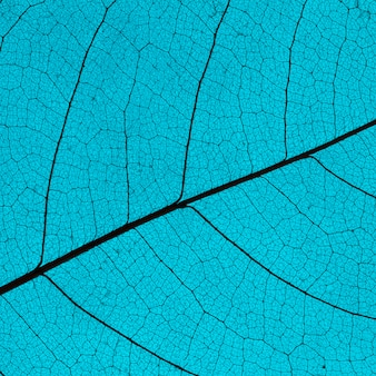 Flache lage des farbigen blattes mit durchsichtiger textur
