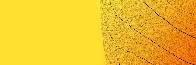 Flache lage des farbigen blattes mit transparenter textur