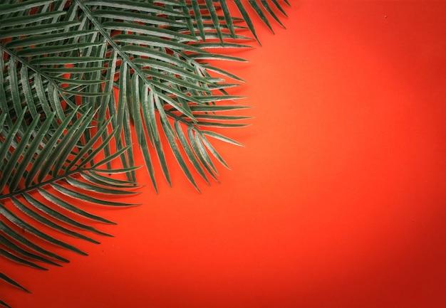 Flache lage des grünen tropischen blattrahmens auf clor hintergrund mit freiexemplarraum