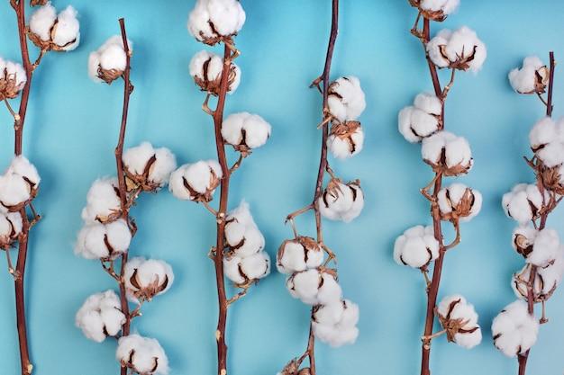 Flache lage des weiblichen hellblauen hintergrunds mit zweig der baumwollblume.