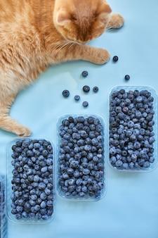 Flache lage frischer saftiger bio-blaubeeren mit katze auf blauem hintergrund