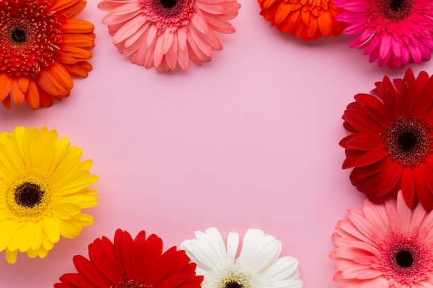 Flache lage gerberablumen mit kopienraumhintergrund