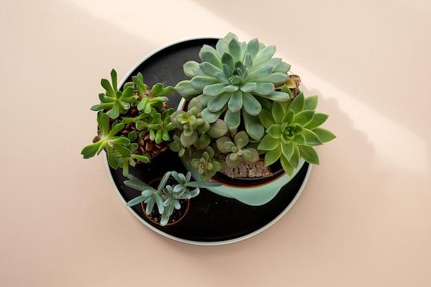 Flache lage grüner frischer sukkulentenblumen und kuktus auf blassrosa-beigem hintergrund. urbaner dschungel-interieur, beauty- und spa-konzept.