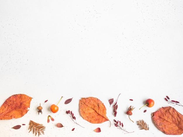Flache lage verschiedener samen und blätter von wilden bäumen lokalisiert auf einem weißen texturhintergrund. herbst botanik grenze. draufsicht. speicherplatz kopieren