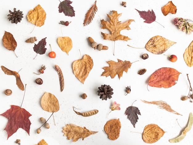 Flache lage verschiedener samen und blätter von wilden bäumen lokalisiert auf einem weißen texturhintergrund. herbst botanik hintergrund. draufsicht