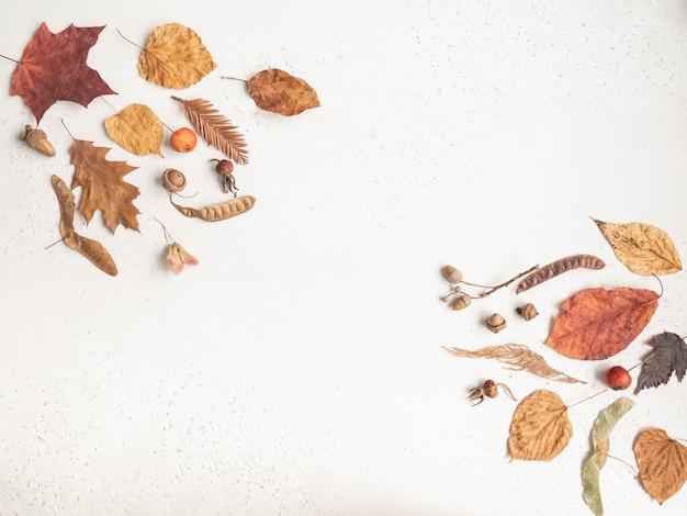 Flache lage verschiedener samen und blätter von wilden bäumen lokalisiert auf weißem texturhintergrund. herbst botanik hintergrund. draufsicht. speicherplatz kopieren