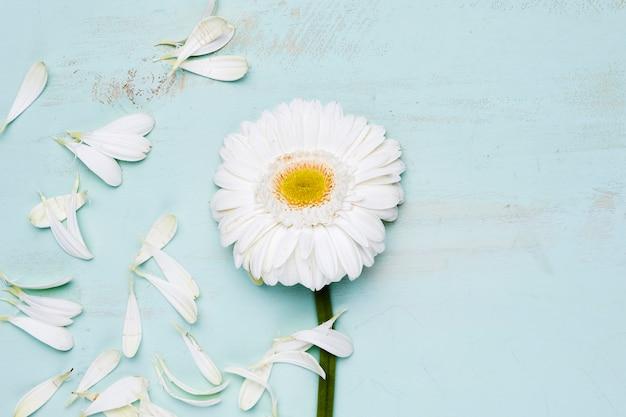 Flache lage von blütenblättern mit exemplar