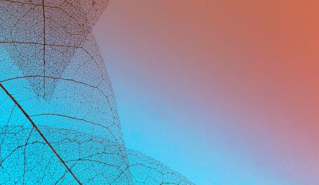 Flache lage von farbigen durchsichtigen blättern lamina