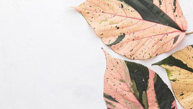 Flache lage von farbigen herbstblättern mit kopierraum