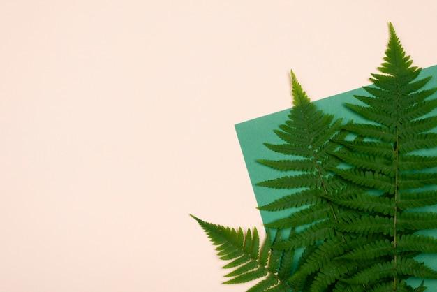 Flache lage von farnblättern mit kopierraum