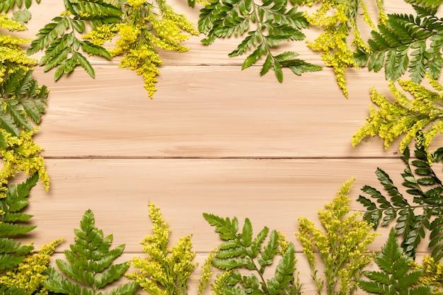 Flache lage von farnen und gras