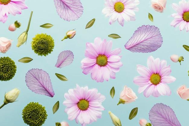 Flache lage von frühlingsgänseblümchen und blättern