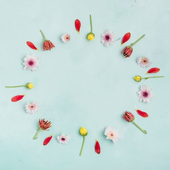 Flache lage von frühlingsgänseblümchen und -blumenblättern