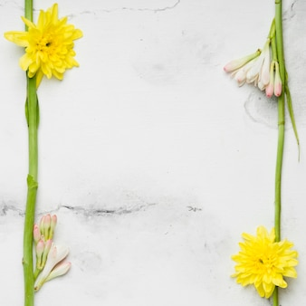 Flache lage von frühlingsgänseblümchen und orchideen
