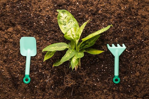 Flache lage von grünpflanzen und gartengeräten